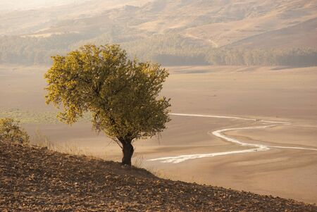 autumn landscape with lonely tree and a course of water in a dry lake   photo