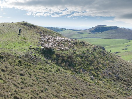 barren landscape of sicilian hinterland with a shepherd who is shepherding his flock Stock Photo - 6987465