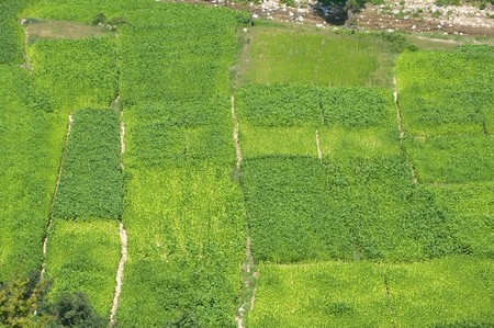 aerial view of abstract composition for green tobacco fields photo