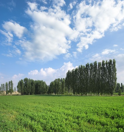 trees on the horizon in a sunny summer day with cloudscape Stock Photo - 7881753