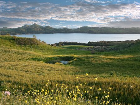 idyllic landscape of yellow flowers, green pasture and blue water of lake and dramatic sky   photo