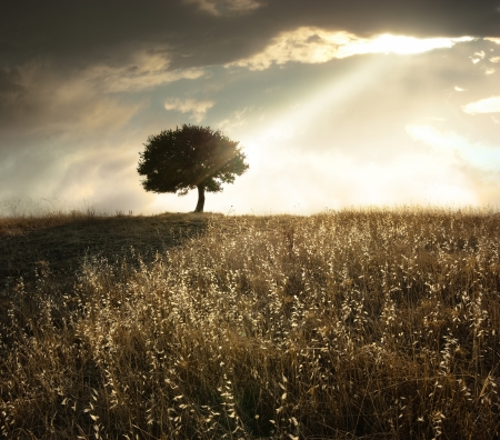 a ray of light breaks through the dramatic sky at sunset and hit an oak tree solitary Stock Photo