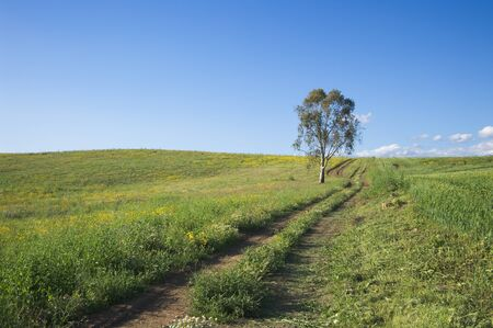 a tractor track crosses grassy field leading to an eucalyptus tree under a clean sky photo