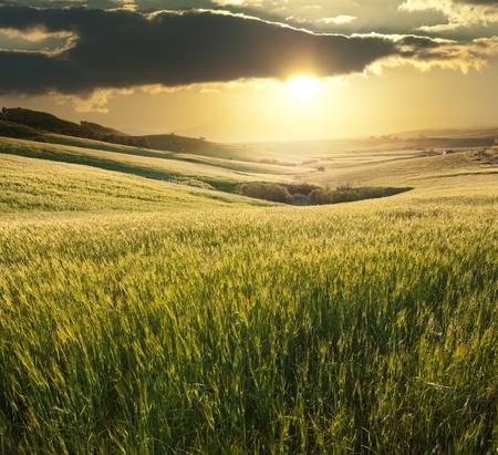 cebada: un campo de trigo con una puesta de sol de oro en el fondo en Sicilia