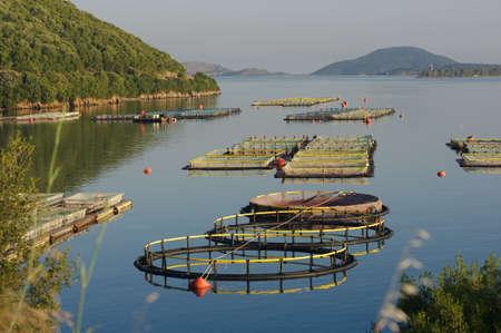 fisheries in the sea of Igoumenitsa, Greece photo