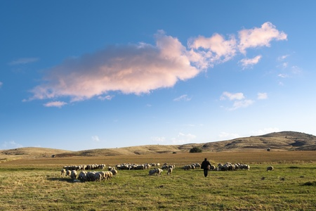 shepherd and his flock of sheep in a prairie of the central Anatolia  under a big cloud in the blue sky at the evening Stock Photo - 8951643
