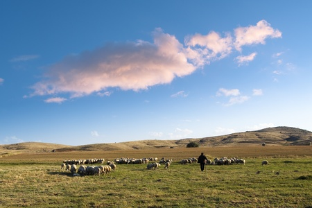 shepherd and his flock of sheep in a prairie of the central Anatolia  under a big cloud in the blue sky at the evening Stock Photo - 9448812