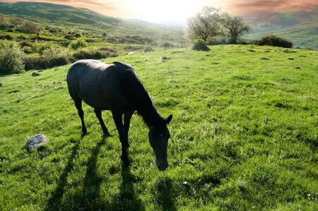 rural landscape at sunset with a horse grazing photo