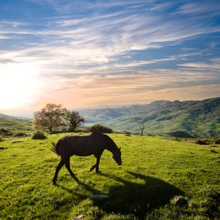 wild horse: rural landscape at sunset with a horse grazing Stock Photo