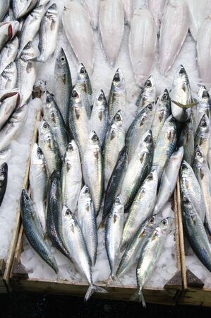 bluefish: container of fresh blue fish in the Modiano fish market in Thessalonika, Greece
