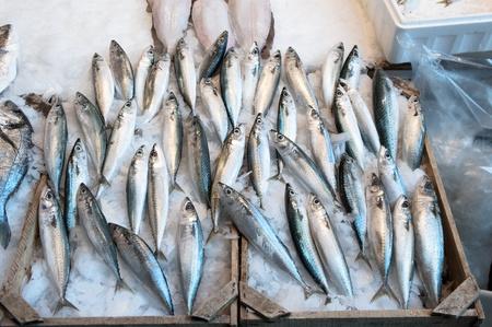 visboer: makrelen vissen op de Modiano vismarkt in Thessaloniki, Griekenland Stockfoto