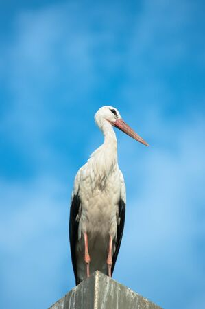 stork against cloudy sky photo