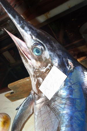 bluefish: swordfish in a fish market Editorial