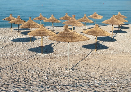 beach umbrellas ordered in rows photo