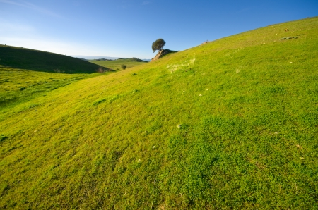 grassland and remote tree on background photo