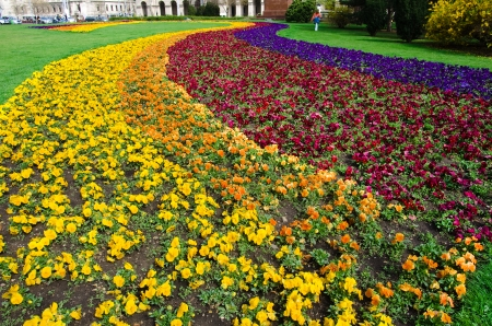 obuda: colorful flowerbed in Budapest, Hungary