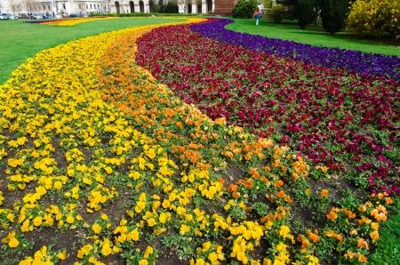 massif de fleurs: parterre color� � Budapest, Hongrie