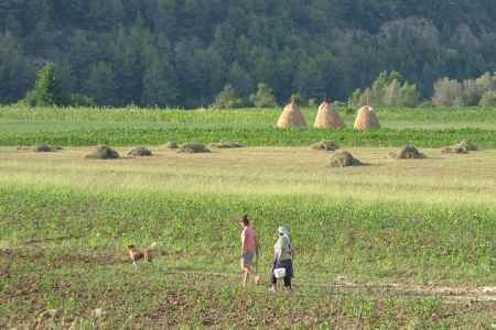 preceded: Ibe, Albania - July 22, 2012  two Albanian women, one young in casual clothes and one older in traditional clothes and veil, are going to work in the fields with work tools preceded by the dog; one of the most common causes that forces women of a family t Editorial
