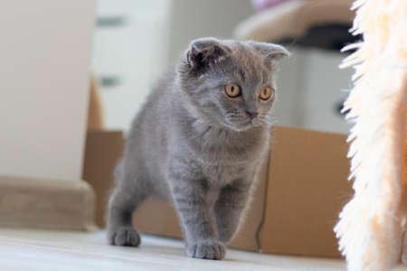 gray kitten goes along the edge of a wooden board against the background of a garden pond.