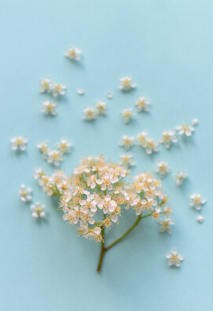 Spring flowers on a blue background Stock Photo - 79424236