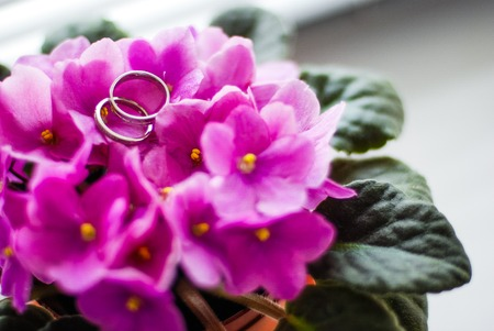 Newly wed couples hands with wedding rings
