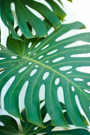feuilles de plantes vertes, arrière-plan. flou artistique