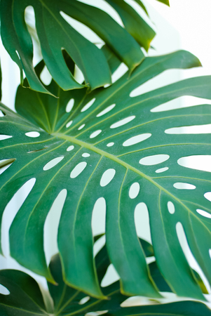 leaves of green plants, background. soft focus