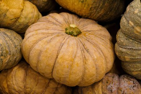 group of pumpkins pale gloomy color close-up lie tight on the stand