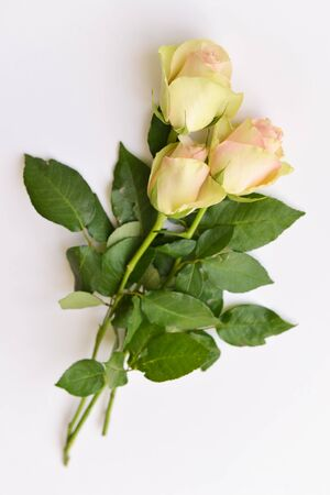 bouquet of white delicate pastel rose flowers on an isolated white background. holiday floral arrangement for collage