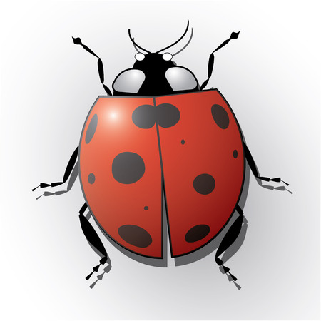 Ladybug isolated on white realistic vector illustration