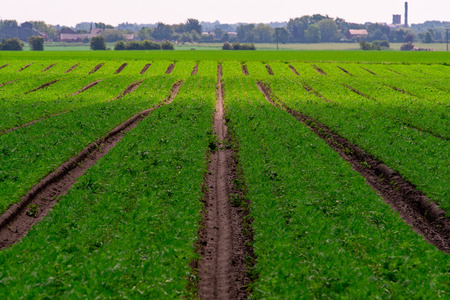 Ploughed lines in a farmers field converge in the distance with the background distorted due to heat haze