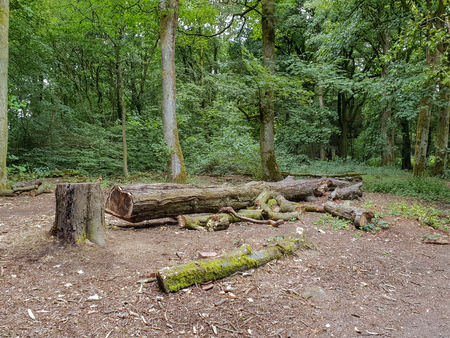 A view of a felled tree in a woodland clearing in Rural Lancashire