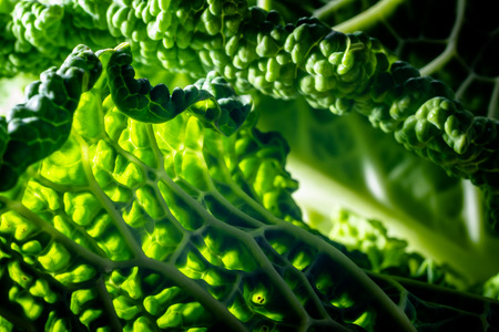 A macro view showing the detail contained within the outer layers of a simple Savoy Cabbage