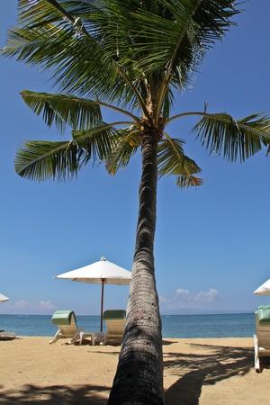 horison: coconut palm on Bali island Stock Photo