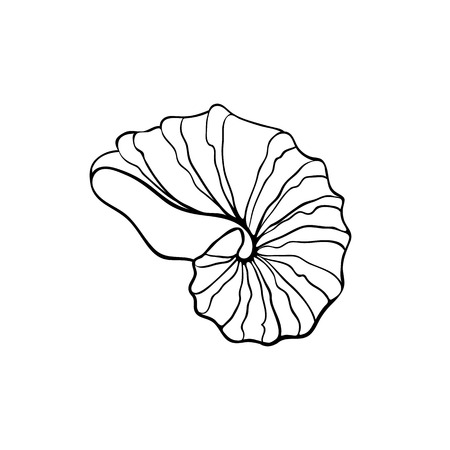 nautilus shell: Hand drawn sea shell. Nautilus shell outline. Seashell icon in black isolated on white background.
