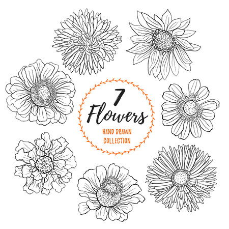 Hand drawn flowers collection. Flowers outlines in sketch style isolated on white background. Set of black ink flowers illustration for coloring books. 矢量图像