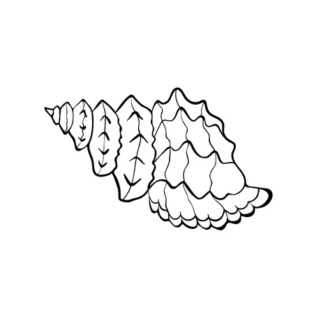 shellfish: Hand drawn sea shell. Shellfish outline. Seashell icon in black isolated on white background.