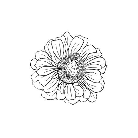 Hand drawn flower flower outlines in sketch style isolated on hand drawn flower flower outlines in sketch style isolated on white background black ink mightylinksfo