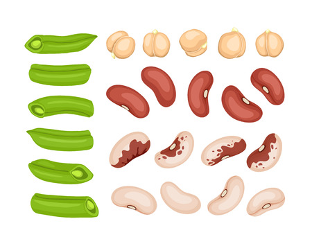 white beans: Fresh cut vegetables isolated on white background. Red beans, white beans, french beans and chickpea elements. Vector beans collection. Illustration