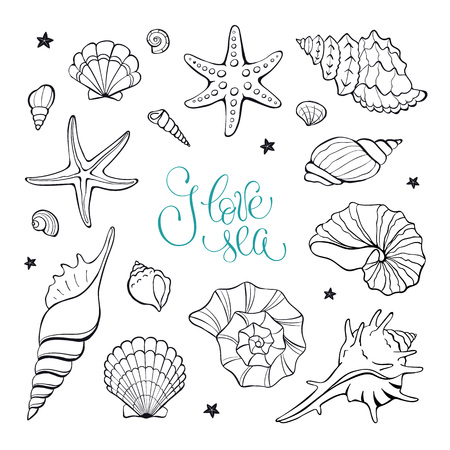 shellfish: Hand drawn sea shells and stars collection. Marine illustration for coloring books. Shellfish outlines isolated on white background. Illustration