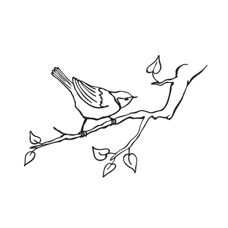 Hand drawn bird sitting on branch isolated on white background. Tit icon in line art style for coloring book.