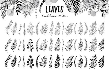 ine: Hand drawn branches collection. Set of sketch style leaves isolated on white background. Vintage ink floral elements. Decorative plants for greeting card and invitation design.