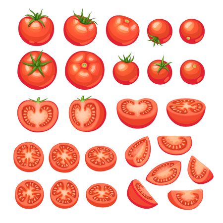 Collection of chopped tomatoes isolated on white background.  Tomato slices illustration. Ilustração