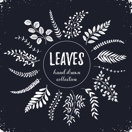 cocaine: Hand drawn branches collection. Set of sketch style leaves isolated on chalkboard. Vintage ink floral elements. Decorative plants for greeting card and invitation design. Illustration