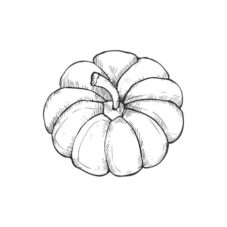 Hand drawn pumpkins vector collection. Pumpkin icons isolated on white background.