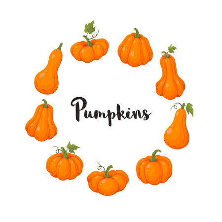 coloful pumpkins set vector illustration