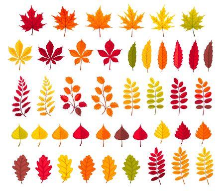 autumn leaves collection Foto de archivo - 129759283