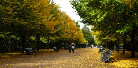 yellow trees: Autumn park with benches and yellow trees Stock Photo