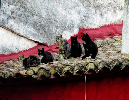undomestic: Five cats sitting on the tile roof red building in Spain cats staring at one point