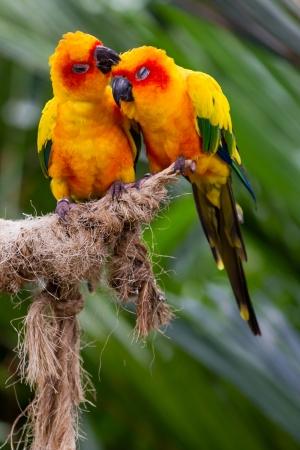 とまり木にキス 2 つの愛の鳥 写真素材